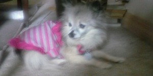 My Little Girl Chica