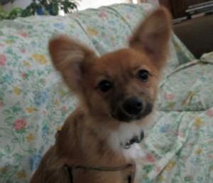 Roxy, the New Puppy